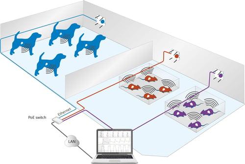 easyTEL+ L setup-dogs and rats-2