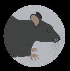 mice_blog_2-02-03-1024x341